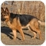 Photo 2 - German Shepherd Dog Dog for adoption in Hamilton, Montana - Molly