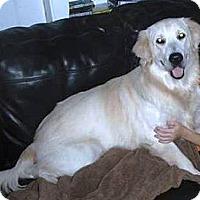 Adopt A Pet :: Zeke - Murdock, FL