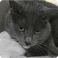 Adopt A Pet :: Erik - San Ramon, CA