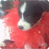 Adopt A Pet :: Demi - Lexington, TN