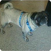 Adopt A Pet :: Banjo - Windermere, FL