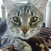 Adopt A Pet :: Anna - Hamburg, NY
