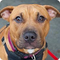 Adopt A Pet :: Mandy - San Francisco, CA