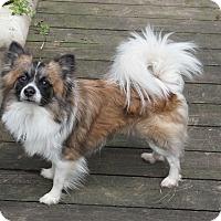 Adopt A Pet :: Denver - conroe, TX