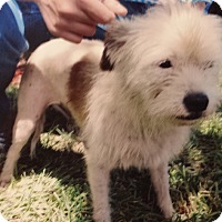 Terrier (Unknown Type, Medium) Mix Dog for adoption in Palmetto Bay, Florida - Gracie aka tweeter