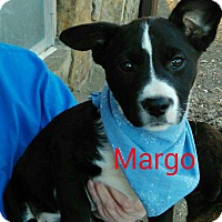 Adopt A Pet :: Margo - Trenton, NJ