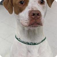 Pointer Mix Dog for adoption in Yukon, Oklahoma - Cassy
