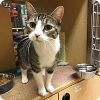 Adopt A Pet :: Tulip - Arlington/Ft Worth, TX