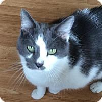 Adopt A Pet :: Jackson (aka Spaz) - O'Fallon, MO