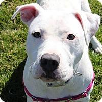 Adopt A Pet :: Sadie (1 of 3) - Whitestone, NY