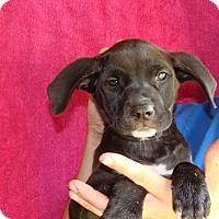 Adopt A Pet :: Misha - Oviedo, FL