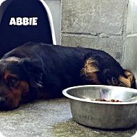 Adopt A Pet :: Abbie - Kimberton, PA