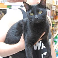 Adopt A Pet :: Salem - Brooklyn, NY
