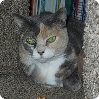 Adopt A Pet :: Jeni - Whiting, IN