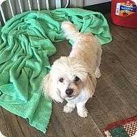 Adopt A Pet :: Vegas - Manassas, VA