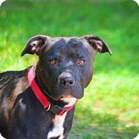 Adopt A Pet :: ROSCOE - Golsboro, NC