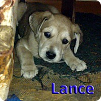 Adopt A Pet :: 'N SYNC Litter: Lance (applications under review) - Akron, OH