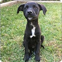 Adopt A Pet :: Jack - Dana Point, CA