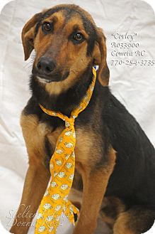 Black and Tan Coonhound Mix Puppy for adoption in Newnan City, Georgia - Corley