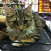 Adopt A Pet :: Nikkie - Pittstown, NJ