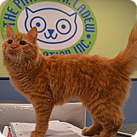 Adopt A Pet :: Flynn - Oyster Bay, NY