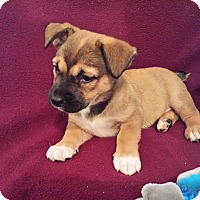 Adopt A Pet :: Paige - Homewood, AL