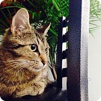 Adopt A Pet :: Bella Bella - Vancouver, BC