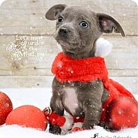 Adopt A Pet :: CHAROLOTTE TECK - Higley, AZ