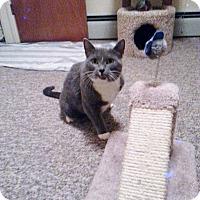 Adopt A Pet :: TriSox - Berkeley Hts, NJ