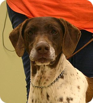 Hastings Ne German Shorthaired Pointer Meet Maggie A Dog For Adoption