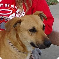 Adopt A Pet :: ROCKLAND - Red Bluff, CA