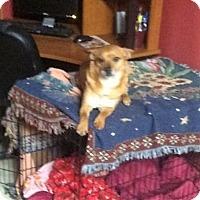 Adopt A Pet :: Evan - Staunton, VA