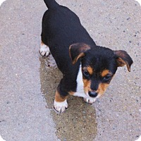 Adopt A Pet :: Asta - Lincolndale, NY
