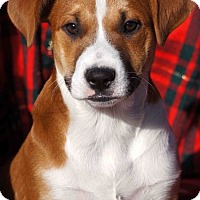 Adopt A Pet :: Cookie - Toms River, NJ