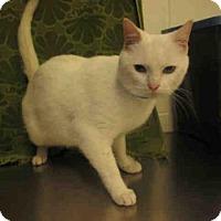 Adopt A Pet :: *RILEY - Upper Marlboro, MD