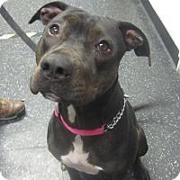 Adopt A Pet :: Nike - Menands, NY