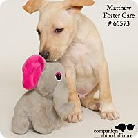 Adopt A Pet :: Matthew - Baton Rouge, LA