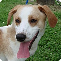 Adopt A Pet :: Buddy - Erwin, TN