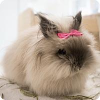 Adopt A Pet :: Charlie - Montclair, CA