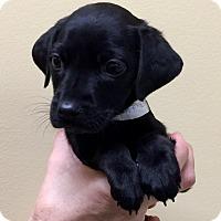 Adopt A Pet :: Mardigras - Oswego, IL
