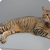 Adopt A Pet :: Boone - Seguin, TX