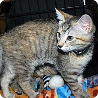 Adopt A Pet :: Enigma - Madison, AL