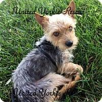 Adopt A Pet :: Munchkin - Visa, CA