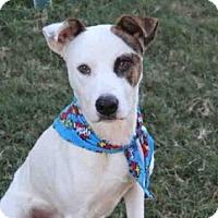 Adopt A Pet :: CARTER - Houston, TX