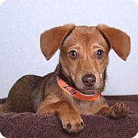 Adopt A Pet :: Lilly - Sudbury, MA