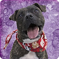 Adopt A Pet :: King - Cincinnati, OH
