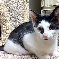 Adopt A Pet :: Opie - Creston, BC
