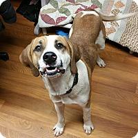 Adopt A Pet :: Rex Ford - Lisbon, OH