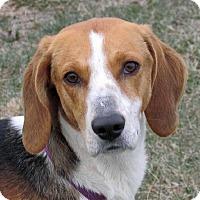 Adopt A Pet :: Savannah - Aurora, IL