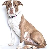 Adopt A Pet :: Sadie - Jefferson City, MO